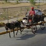 Donkey pulling a cart (StreetView)