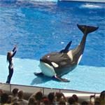 Sea World Orlando (StreetView)