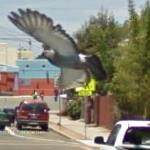 Google Bird View (StreetView)