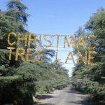 Christmas Tree Lane (StreetView)