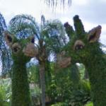 Topiary giraffes