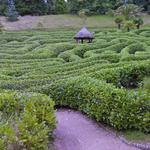 Laurel maze at Glendurgan Garden