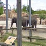Elephant (StreetView)