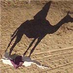 Man riding a camel (Google Maps)