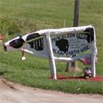 Cow mailbox (StreetView)