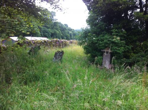 Looking at the overgrown graves.