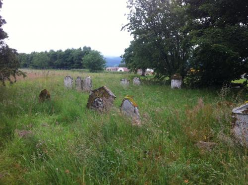 Graves among the overgrowth.