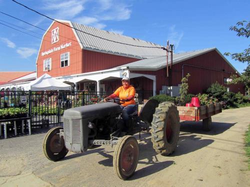 Working Girl @ Springdale Farms 08 16 13