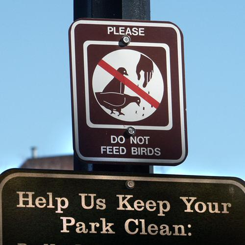 Do Not Feed the Birds, Dupont Circle, February 2006