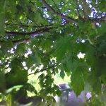 Google Tree View (StreetView)