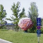 Big roses (StreetView)