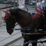 Horses with ear covers (StreetView)