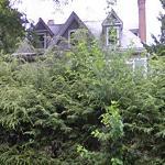 Donald Weitzman and Harriet Goldberg's House (StreetView)