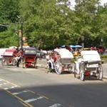Horse Drawn Carriages (StreetView)