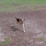 Dog in the Ampitheatre of Pompeii (StreetView)