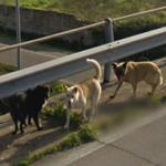 Roadside dogs
