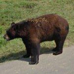 Bear (StreetView)