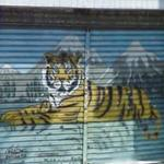 Tiger (StreetView)