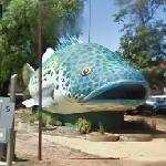 Giant Murray Cod (StreetView)