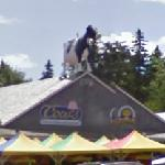 Big Cow on the roof (StreetView)