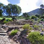 Kirstenbosch National Botanical Garden (StreetView)