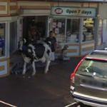 Cow (StreetView)