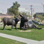 'Scottish Angus Cow and Calf' by Dan Ostermiller (StreetView)