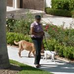 Walking the Dog (StreetView)