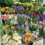 Windsor Flowers (StreetView)