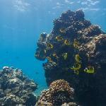 Google Maps Underwater (Hanauma Bay)