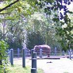 Asian Elephant (StreetView)
