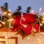 Poinsettia Christmas decoration (StreetView)