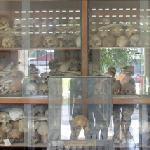 Cabinets filled with human skulls