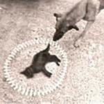 'Requiem pour un chat' (StreetView)
