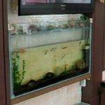 Small aquarium (StreetView)