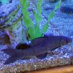 Aquarium fish (StreetView)