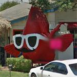 Fish with glasses and a moustache (StreetView)