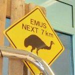 Emu crossing (StreetView)