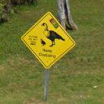Nene Crossing (StreetView)