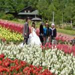 Wedding Party at Shikisai Hill (StreetView)