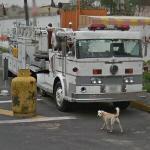 Fire truck - tiller ladder