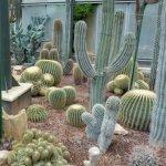 Cactus (StreetView)