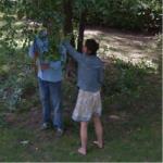Tree Trimming (StreetView)