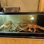 Crabs (StreetView)