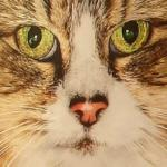 Cat close-up (StreetView)