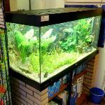 Aquarium (StreetView)