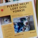 """Lost Dog"" Poster (StreetView)"
