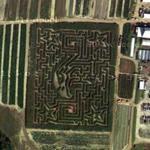 Springdale Farm Corn Maze