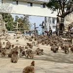 Takasakiyama Monkey Park (StreetView)