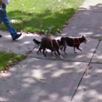 2 Dogs (StreetView)